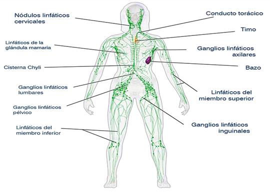 Influencia del drenaje linfático - Manual tratamiento úlceras